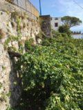 aa1-cuomo-vines